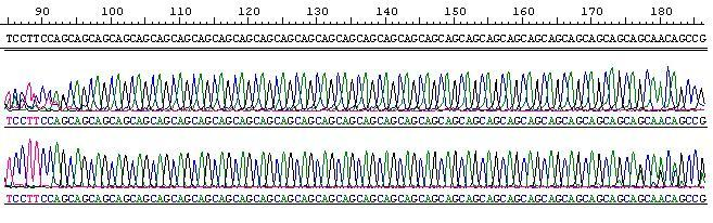sequence29allele