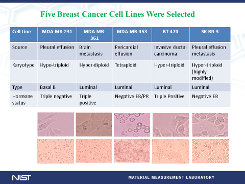 Genomic DNA from 5 human breast cancer cell lines with different amounts of amplification of the HER2 gene