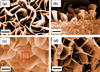 four images of iron oxide nanoblades