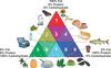 Food Triangle