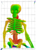 Skeleton of bright green and yellow with some pink and dark blue