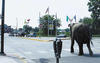 University of Wisconsin-Stout Elephant Cord blog photo shows the zoo escapee arriving on the campus of UW-Stout in 2002