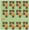 Small array of transistors designed for single device integration.