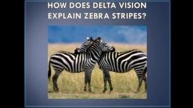 The Zebra's Stripes- A New Theory of Animal Vision Thumbnail