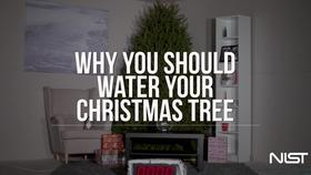 Why You Should Water Your Christmas Tree Thumbnail